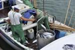 4 Tonnen Sardinen für den Müll