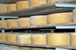 Molkereikooperative von Faial benötigt Hilfe