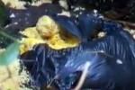 Umweltsünde auf Pico entdeckt