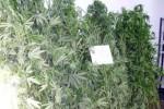 Polizei beschlagnahmt Cannabis im Wert von 370.000 Euro