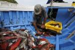 Weniger Fisch auf den Azoren