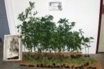 Neue Drogenfunde auf den Azoren