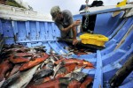 Fischfang auf den Azoren erleidet Einbruch