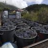 Pico investierte 2,3 Mio Euro in Weinbau seit 2004
