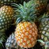 Faja de Baixo baut Centro de Interpretacao da Cultura do Ananas